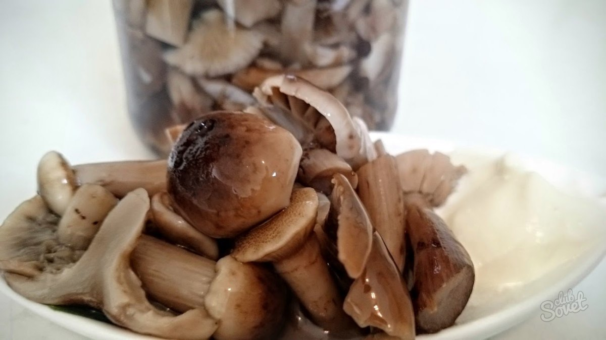 Как правильно обработать грибы рядовки. Маринованные грибы рядовки